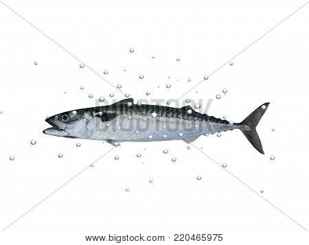 mackerel fish with bubbles on a white background