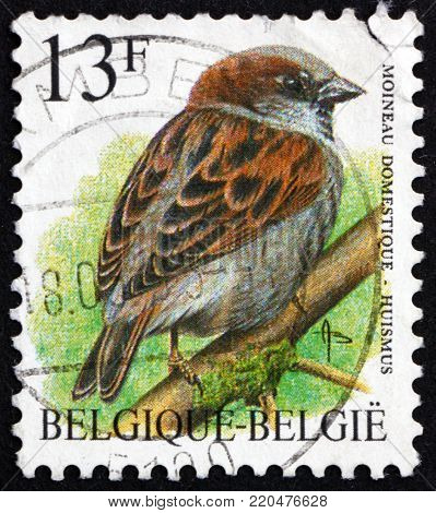 BELGIUM - CIRCA 1994: a stamp printed in the Belgium shows house sparrow, passer domesticus, is a bird of the sparrow family, circa 1994