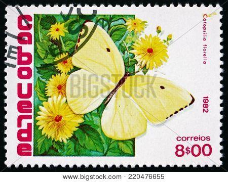CAPE VERDE - CIRCA 1982: a stamp printed in the Cape Verde shows African migrant, catopsilia florella, butterfly, circa 1982