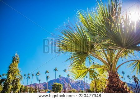 Coachella Valley Vegetation. Palm Springs, California, United States of America. poster