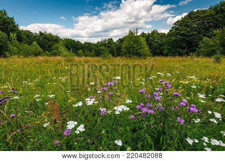 grassy glade with wild herbs. beautiful nature scenery among the forest in summertime