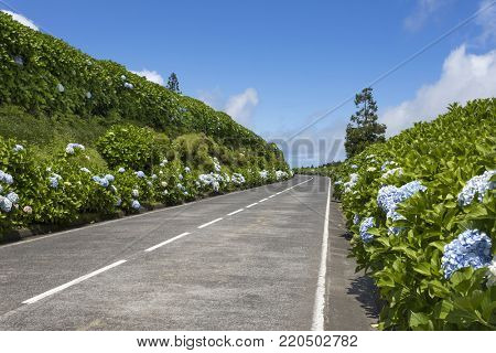 Beautiful Road in Sao Miguel Island - Azores, Portugal