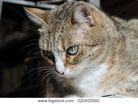 Home Pet Animal Cat Portrait Close Up