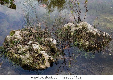 Moss rocks in water winter in Turkey