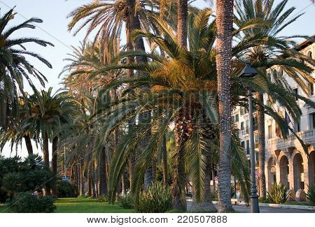 PALMA DE MALLORCA, BALEARIC ISLANDS, SPAIN - DECEMBER 5, 2017: Paseo Maritimo dusk palm trees and harbor with Christmas light decorations on December 5, 2017 in Palma de Mallorca, Balearic islands, Spain.