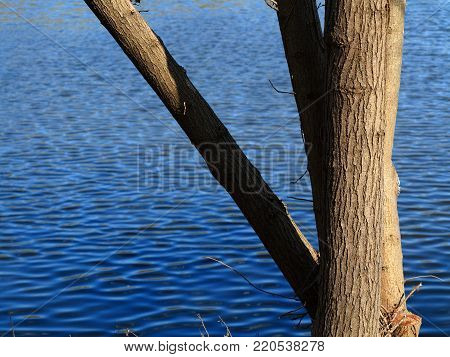 Lakeside Tree and Blue Water - Branches and pond with copy space.