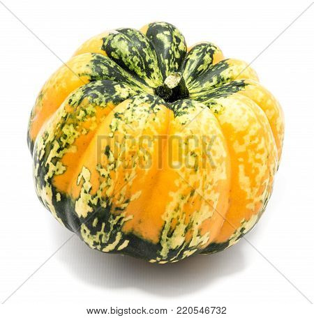One whole colorful pumpkin (spotty  dark green yellow) isolated on white background