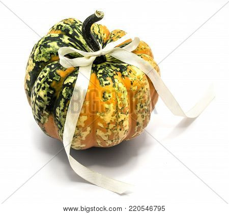 One whole colorful pumpkin (one spotty green yellow) with a champagne bow isolated on white background