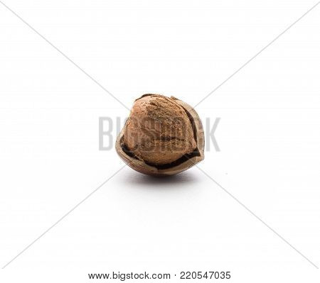 One shelled hazelnut inside a shell isolated on white background