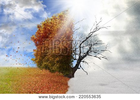 Autumn and winter season tree, nature concept