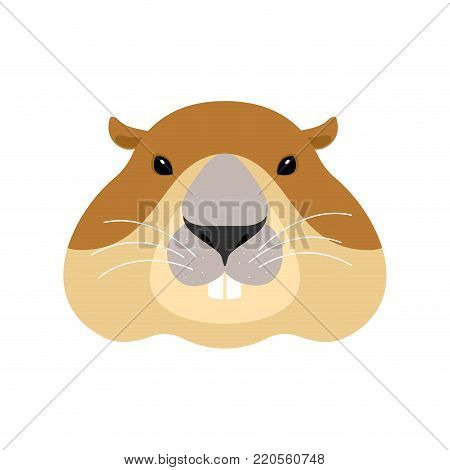 Groundhog face. Woodchuck head. Marmot. Vector illustration
