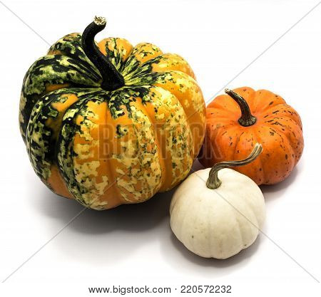 Three whole colorful pumpkins (spotty green yellow, orange, white) isolated on white background