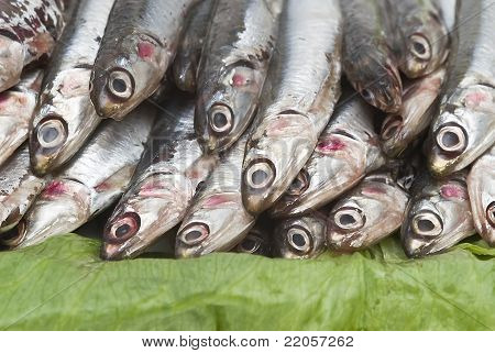 Pile of fresh anchovies from the North sea. poster