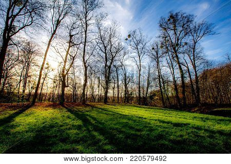 Winter landscape of bare branched deciduous trees at sunset or sunrise casting long shadows across a green grassy pasture or field backlit by a glow from the sun