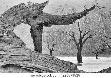 Tree skeleton at Deadvlei near Sossusvlei, Namibia. Monochrome