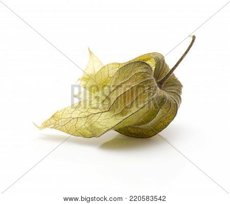 One physalis in husk isolated on white background