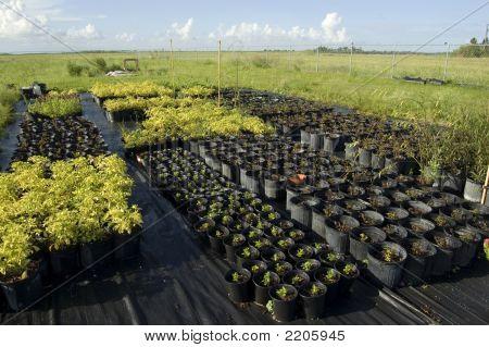 Plant Nursery Stock
