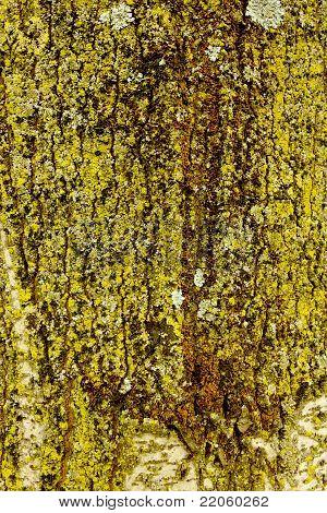 Lichens background