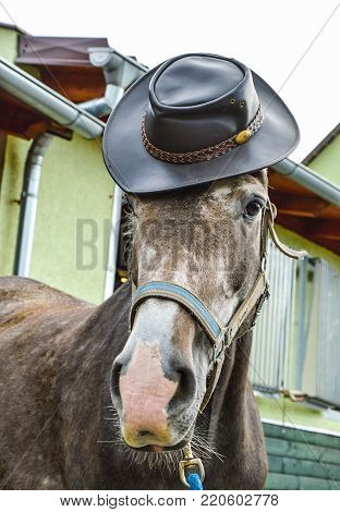 a funny horse that has a cowboy hat on my head