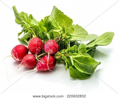 Group of five whole red radish with fresh green leaves isolated on white background