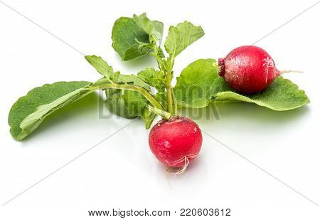 Two bulbs of red radish with leaves isolated on white background