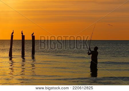 Fisherman casting his line in the Gulf of Mexico at sunset as a group of Double-crested Cormorants look on - Fort Myers Beach, Florida