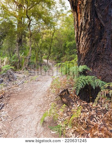 Forest hiking trail into Refuge Cove campground in Wilsons Promontory National Park, Victoria, Australia