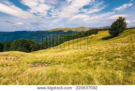 gorgeous weather over grassy slopes of Carpathians. wonderful mountain landscape with beech forests on hillside in summer time. Location Svydovets mountain ridge, Ukraine