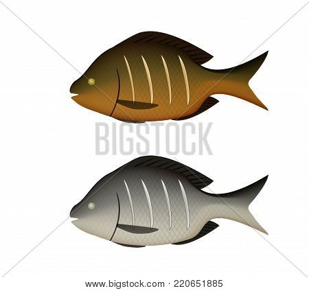 Boiled and fried fish on white in 3D vector design