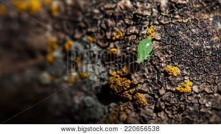 moustached green aphid crawling on a mossy surface macro insect closeup abstract background bokeh wallpaper backdrop