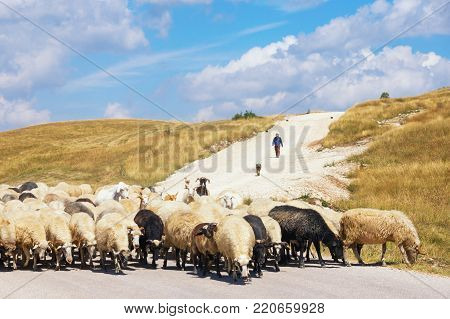 Beautiful landscape with blue sky, white clouds, yellow grassland and herd of sheep. Balkans, Montenegro, Krnovo