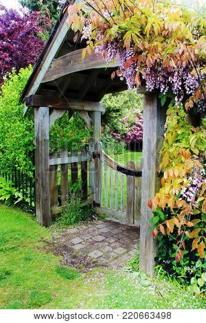 Picket fence and garden gate covered in blooming wisteria.