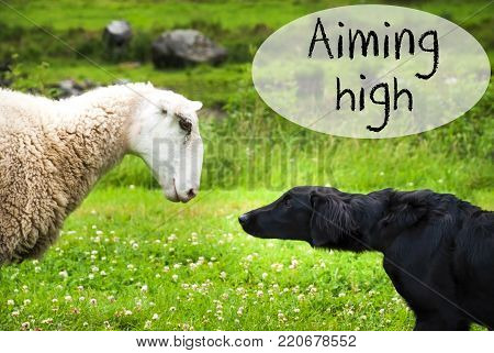 Dog Meets Sheep With Speech Balloon. English Text Aiming High. Green Grass Meadow In Norway.