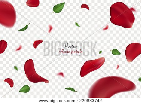 Falling red rose petals and green leaves isolated on transparent background. Vector illustration with beauty roses petal, applicable for design of greeting cards on Women Day and Valentine's Day.