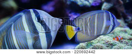 beautiful aquarium fish in a sea aquarium
