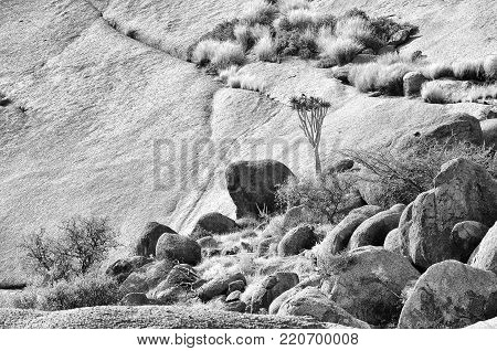 Monochrome landscape with quiver tree at the Spitzkoppe in Namibia