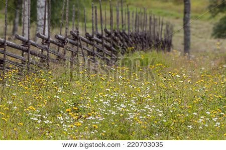 Closeup view of wildflowers on a meadow. Wooden fence in the background.