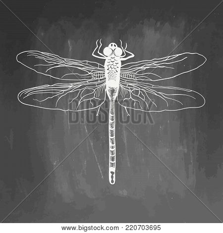 Dragonfly. Beauty insect. Hand drawn vector stock illustration. Chalk board drawing. White realistic sketch on blackboard and chalkboard imitation for greeting card, invitation, print, web project.