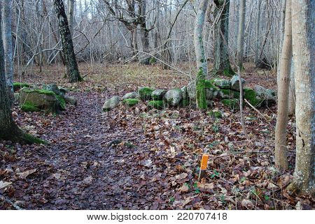 Marked footpath in a deciduous forest by fall season at the swedish island Oland