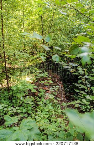 Ancient foundation in the thickets. The ruins of an ancient monastery in a thicket of wild forest.