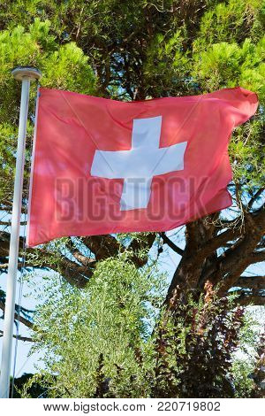 The flag of Switzerland consists of a red flag with a white cross, seen outdoor in the forest