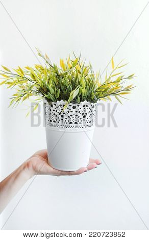 houseplant in the hand