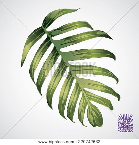 Tropical leaf. Vector green palm leaf. Silhouette of exotic plant. Botanical element isolated on white background. Summer hawaiian hand drawn vector tropical leaves. Monstera, fern, palm exotic plant.