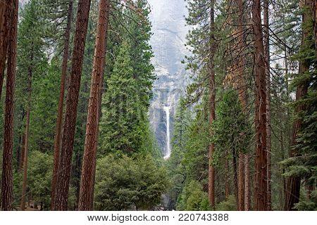 Trees and waterfall at Yosemite National Park California