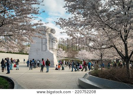 WASHINGTON DC - MARCH 29, 2017 - Blooming cherry trees and tourists surround the Martin Luther King, Jr. Monument at the Tidal Basin in Potomac Park.