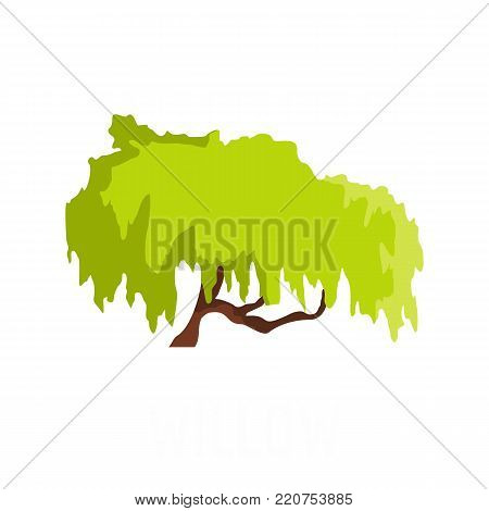 Willow tree icon. Flat illustration of willow tree vector icon isolated on white background