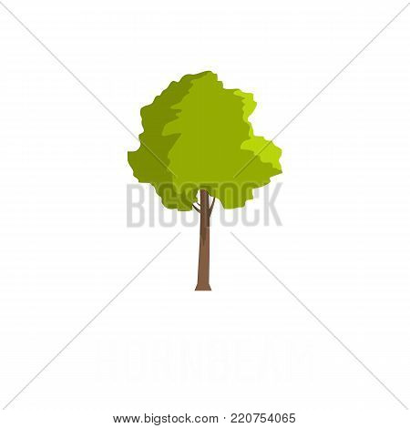 Hornbeam tree icon. Flat illustration of hornbeam tree vector icon isolated on white background