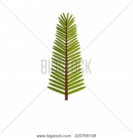 Sequoia leaf icon. Flat illustration of sequoia leaf vector icon isolated on white background