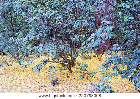 Whimsical forest including lush green plants with yellow leaves on the forest floor during autumn foliage