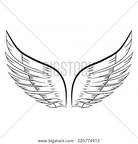 sketch of a pair of white wings. Vector illustration. Hand drawing.